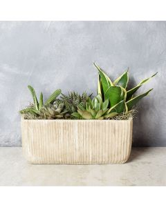 Indoor Succulent Garden, floral gift baskets, gift baskets, succulent gift basket